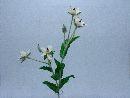 Wild Christrose WEISS 100 x2 60cm