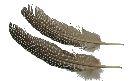Perlhuhn Feder NATUR 7603 ca. 35 Stück Guinea 20 cm 1Box=15 Gramm