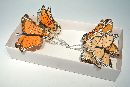 Schmetterling Stecker ORANGE-GEMISCHT 9,5cm 14138
