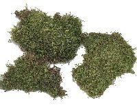 Plattenmoos GRÜN (natur) 2kg Sparp.