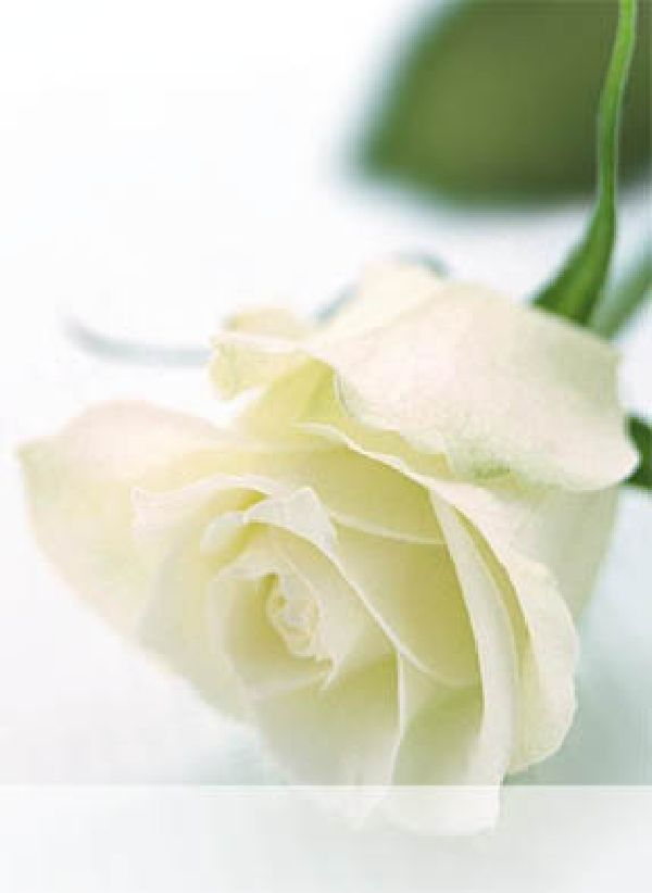 Minikarten Weiss-Grün / Rose Grace - Blanco