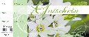 Gutschein Weisse Rosen mit grün Bon Block 24,5x10,5cm