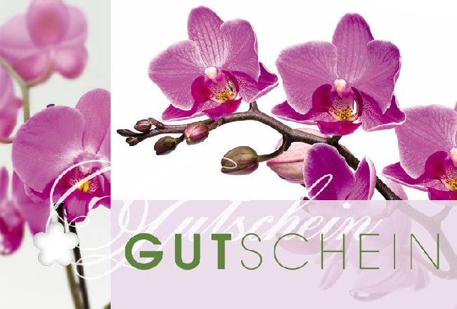 Gutschein Orchidee Fleur Plus