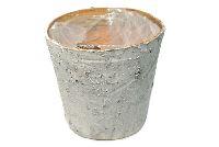 Topf Birke / Birkentopf WEISS ABGEW. 11cm mit Folie
