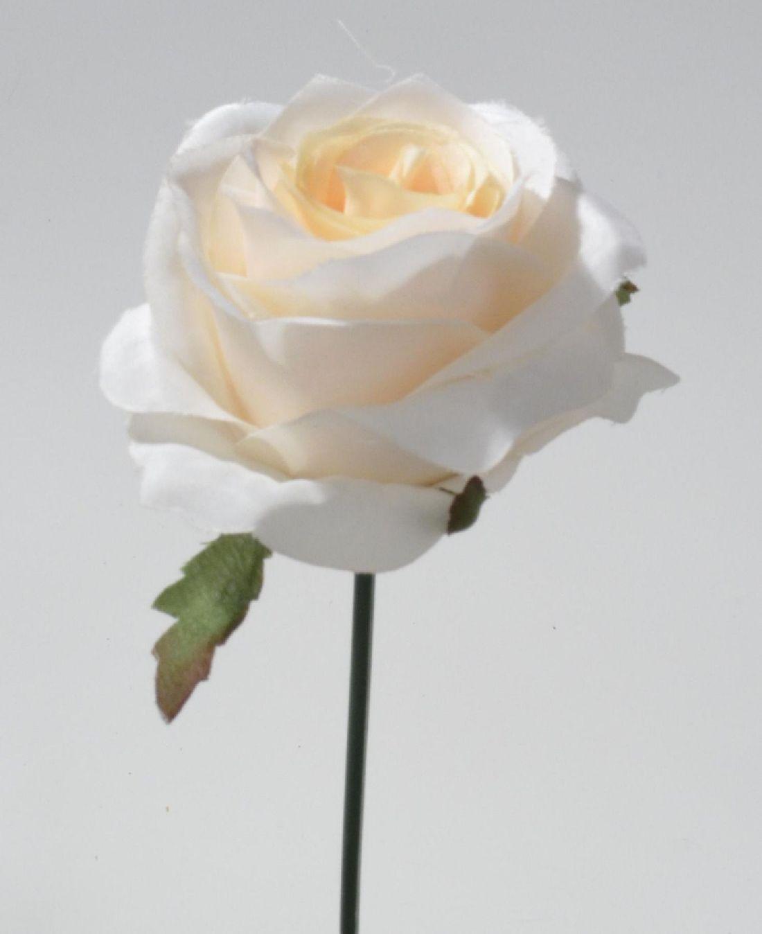 Rose Elena champagner 113912-14 Ø10cm  Länge=19cm