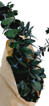 Eucalyptus CAP GRÜN 150 Gramm